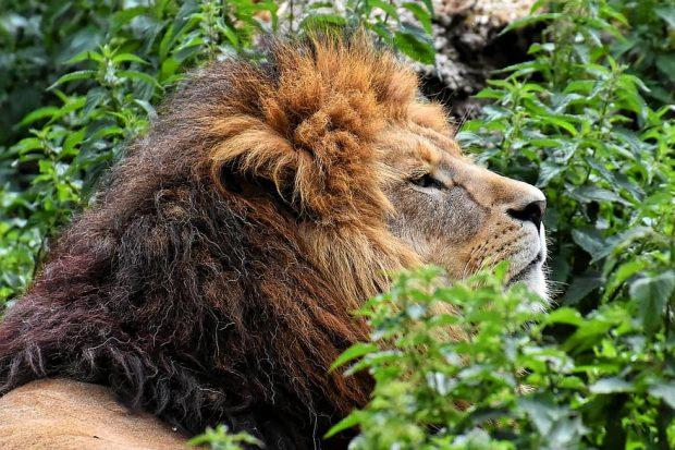 Quelques astuces pour organiser un safari sur mesure en Afrique