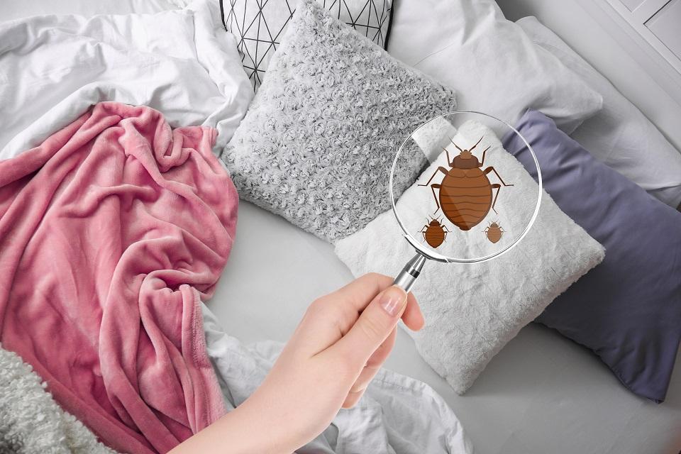 Punaises de lit : les bons gestes à adopter
